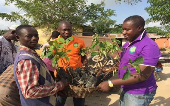 Ghanaian community rescued from devastation in dying cocoa trees and ecology