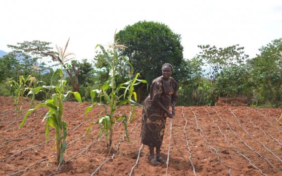 Climate smart agripreneurs in East African to benefit from $43 Million Dutch Funding