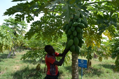 Climate action investment needs to move to smallholder farmers