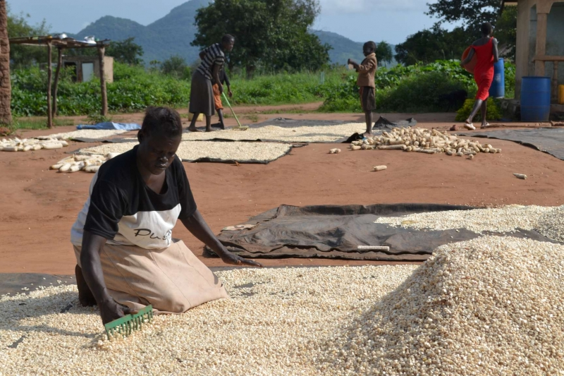 COVID-19: African women in agriculture struggling to cope