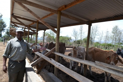 Investment in livestock value chain can help pastoralists adapt to climate change
