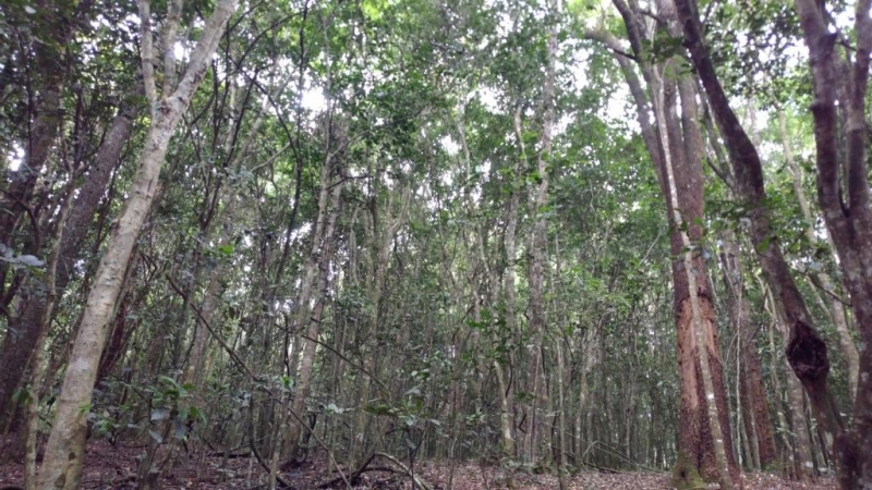 Ghana can have forests within its cities to fight climate change