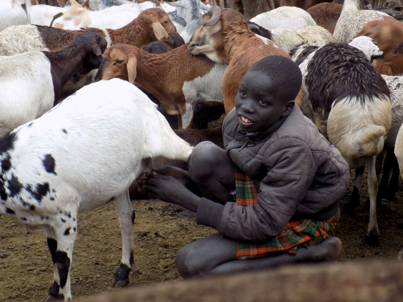 Conflict as nomadic pastoralists face starvation amid the looming drought in Northern Uganda