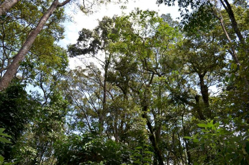 Africa Climate Week: Groups express concerns over forest decline