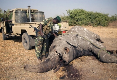 EU to Support Africa's anti-wildlife trafficking efforts with €30m