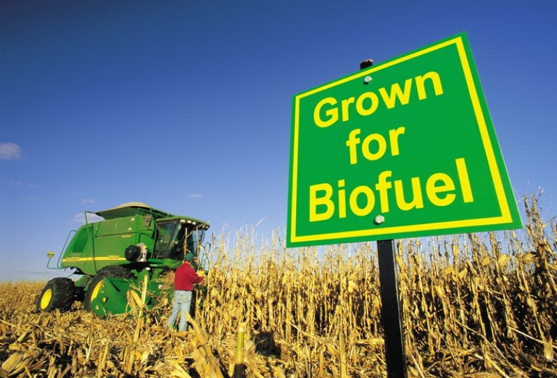 Fewer biofuels, more green space: Climate action researcher calls for urgent shift