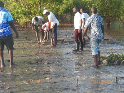 Mangrove restoration in Kenya – a source of livelihoods that is a fight against climate change