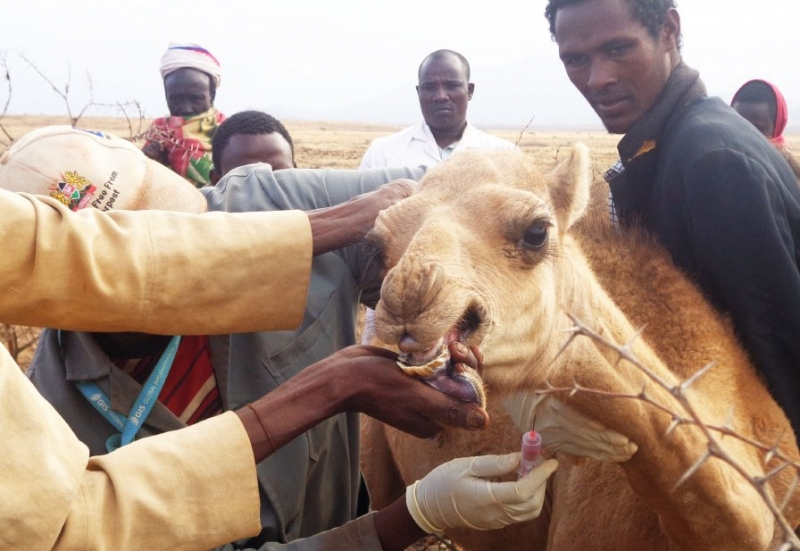 Scientist seek for a wholesome approach in addressing zoonotic diseases