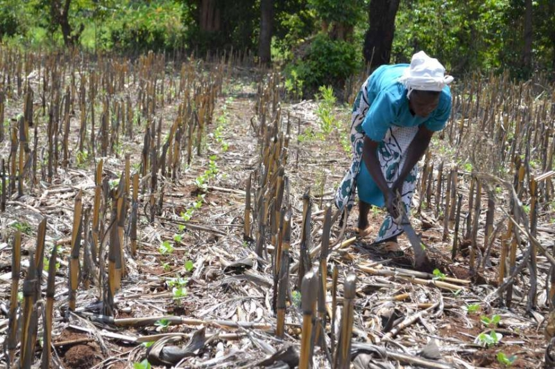 Agriculture gets fresh breath in climate talks