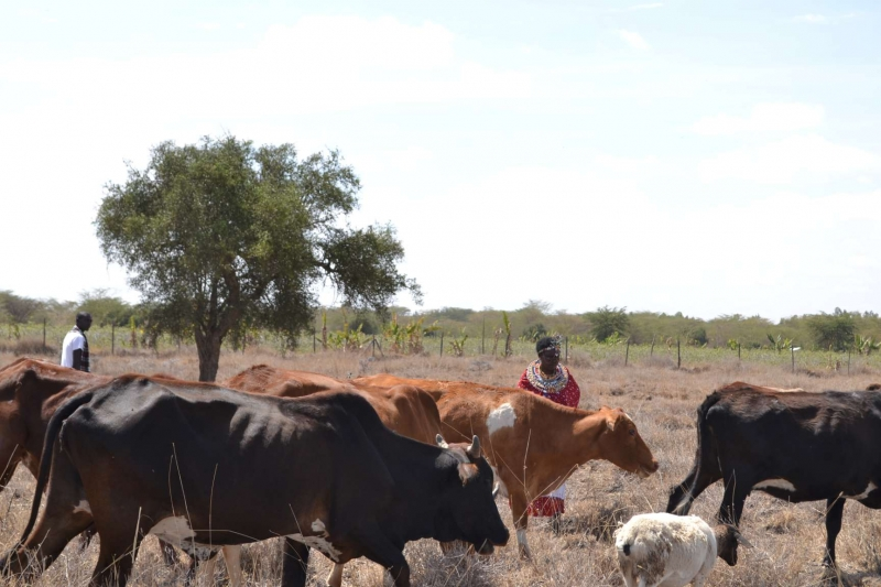 New study reveals threats and climate adaptation opportunities in Kenya's arid lands